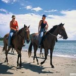  Horse riding on the beach is one of the many activities available in Cape Tribulation
