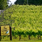 Blue Grouse Estate Winery and Vineyard