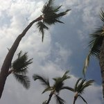 looking up at palm trees from beach
