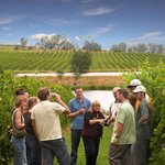 Australian Wine Tour Company