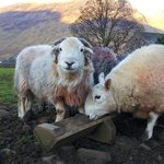 Tups having breakfast