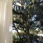                    A view out the Hibiscus patio/porch door