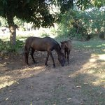                    Back Yard Horses