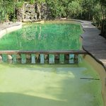                    The pool, filled with cenote water