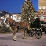 Carriage for Hire Private Tours