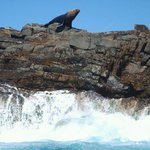                                      Seals continue to frequent the rocks at Seals.