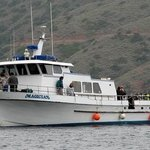 Magician Dive Boat - Day Tours