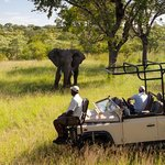 Ulusaba Private Game Lodge