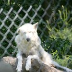 Wolf Conservation Center