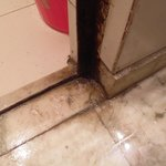                    Mould on the floor
