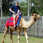                    Dad and daughter riding the camel