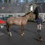 Ross House Equestrian Centre & Guest House