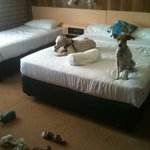 Dogs enjoying the pet friendly room