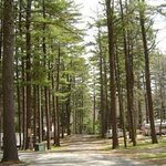 Foto de Sennebec Lake Campground