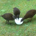                    Weka feeding