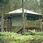                    the beautiful octaganol elevated trehouse like cabins with spas