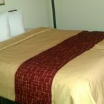 Φωτογραφία: Red Roof Inn & Suites Dover