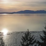                    Chuckanut
