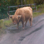  A local Highland resident