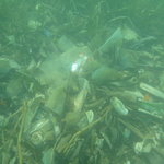                    Some of the garbage you will find underwater near the Gazebo beach.