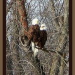 eagles across from the motel