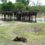                    Plenty of elephants and the odd wild dog