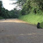 Foto de CVK Lakeside Budget Accommodation & Monkey Sanctuary