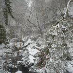                    Hareshaw Linn in the snow