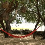  hammocks by the beach