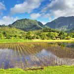 View behind the Hanalei Community Center