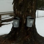 2013 Maple Syrup Season in full swing.
