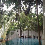 Pool view from double lounge under the banyan tree. Also view from Room 3.