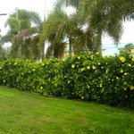 Beautiful Privacy Hedges