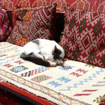 Friendly riad's cat