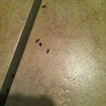 Ants in bathroom, also in the bed and hot tub