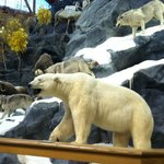                    Cabela&#39;s - Owatonna, MN