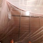                                      From inside the mosquito net