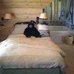                                      Bed in the Northwoods Hideaway