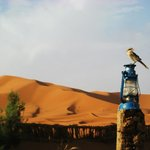 Just an amazing shot of a bird in Merzouga