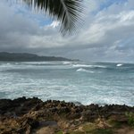                    Turtle Bay North Shore