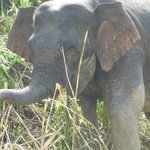 Beautiful elephant seen on the way to Lodge