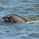                    awesome dolphin tours