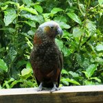 A visitor outside of our Stewart Island Lodge Room