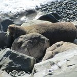 Sea lion just basking on the beach