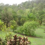                    Backyard View from Verandah