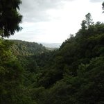 Puketi Forest - A view over the forest during the combo walk