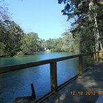 View in Homosassa Springs State Park