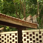 Monkeys on grounds