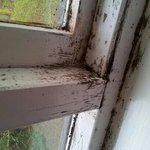                    mould on window frame. it was all over the frame