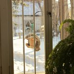 Bird feeders at breakfast time